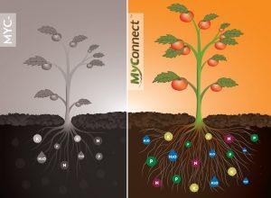 MyConnect technology mycorrhizae