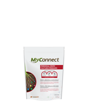 MyConnect Professional Small Format