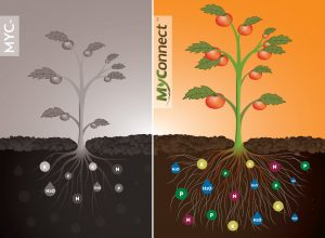 MyConnect technology mycorrhizae